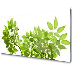 Panel Szklany Gałąź Liście Roślina Natura