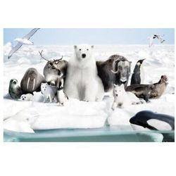 Zwierzęta zamarzniętej krainy - plakat