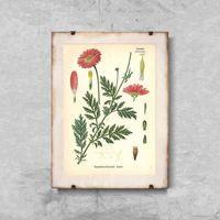 Plakaty, Plakaty w stylu retro Plakaty w stylu retro Aster z nadrukiem botanicznym