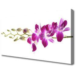 Obraz na Płótnie Kwiaty Roślina Natura