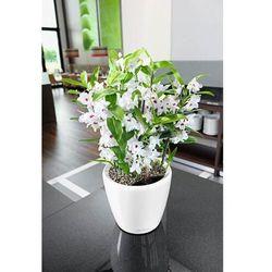 Donica lechuza classico ls - taupe (kawa z mlekiem) - 21 cm, połysk