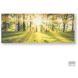 Obraz Słoneczny las 105887 Graham&Brown