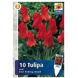 Tulipan Red Riding Hood