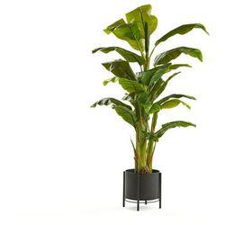 Bananowiec, 1500 mm, czarna stalowa donica na nodze