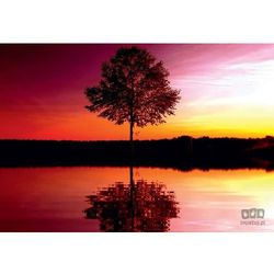 Fototapeta Drzewo 8-007