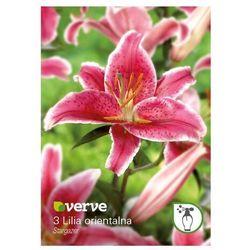 Cebule lilia wschodnia Verve Stargazer 3 szt.